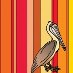 8x10 brown pelican $10